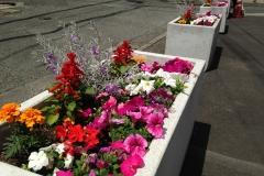 裏駐車場の花