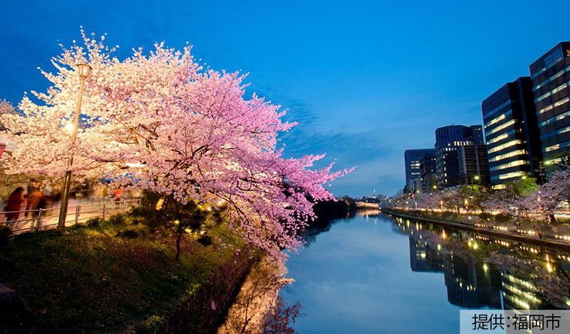 舞鶴公園(福岡城跡・桜)
