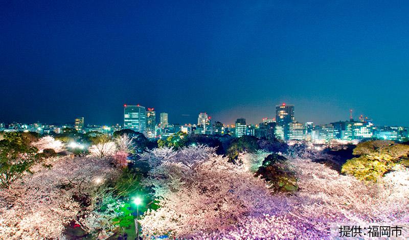 舞鶴公園(福岡城跡・桜・夜景)